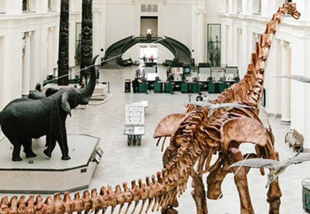 Learning from The Field Museum: Service Design and the Built Environment